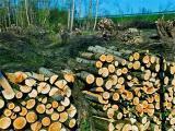 《空気のきれいな森の中で働きませんか?》自然を保護しながら、手に職をつけて働きませんか!?